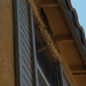 Bees Nesting in the Eaves of a Home