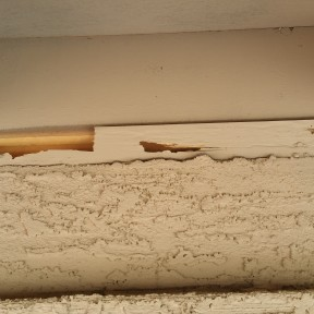Termite Damage to Eaves of a Home